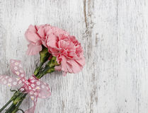 Pink carnation flower on white background Stock Photography