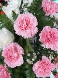 Pink carnation flowers Royalty Free Stock Photos