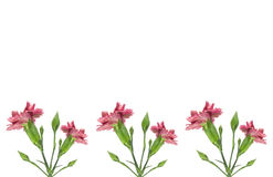 Pink carnation flowers border Stock Image