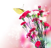 Pink Carnation with Butterfly Stock Image