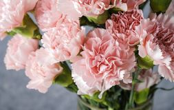Pink carnation flowers in glass vase royalty free stock images