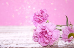 Pink Carnation flowers on rustic white wooden table. Royalty Free Stock Photo