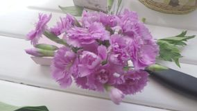 Pink carnation flowers in a vase on florist`s table. stock video