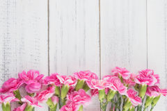 Pink carnation flowers on white wood Stock Image