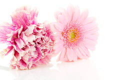 Pink carnation and gerber flowers Royalty Free Stock Images