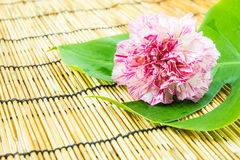 Pink carnation and green leaf on bamboo background Royalty Free Stock Images