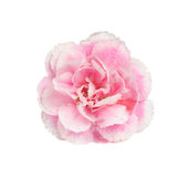 Pink carnation isolate on white with work path Stock Photo