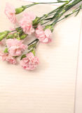 Pink carnation with paper Royalty Free Stock Photography