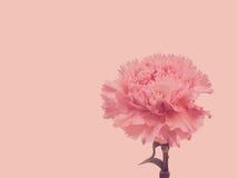 Pink carnation retro style Stock Image