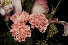 Pink Carnations. Carnation colored pink in a bouquet of flowers Stock Photo
