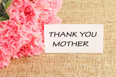 Pink carnations flower for Mother's day Stock Image