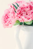 Pink carnations on light shabby chic background Stock Image