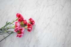 Pink carnations on a marble table royalty free stock photos