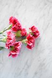 Pink Carnations On A Marble Table Royalty Free Stock Image