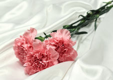 Pink Carnations on White Satin. Pink carnations laying on white satin Royalty Free Stock Images