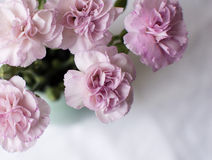 Pink carnations and white tablecloth (cropped) Stock Images