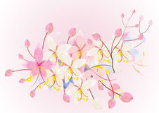 Pink cassia or wishing tree flower on white background,vector illustration Stock Photos