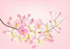 Pink cassia or wishing tree flower on white background,vector illustration Stock Photography