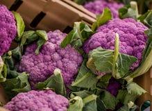 Pink cauliflower Royalty Free Stock Photography