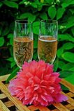 Pink champagne in a garden Stock Photos