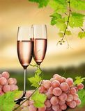 Pink champagne and grapevine. Champagne in two glasses and grapes, with grapevine on background of sunset vineyard Royalty Free Stock Photography