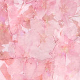 Pink cherry blossom background Stock Photo