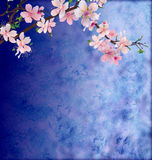 Pink cherry blossom branch on dark blue Royalty Free Stock Images