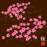 Pink Cherry Blossom Branches Royalty Free Stock Images