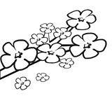 Pink Cherry Blossom flower branch colorless Royalty Free Stock Photo