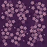 Pink cherry blossom flower pattern Royalty Free Stock Image