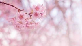 Pink cherry blossom retro vintage Royalty Free Stock Photos