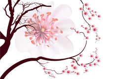 Pink cherry blossom sakura flowers in Japanese style Stock Photography