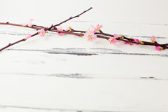 Pink cherry blossom tree background. Cherry bloom twig on white vintage wooden background with copy space stock photos