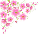 Pink cherry blossoms . Royalty Free Stock Images