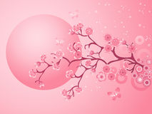 Pink Cherry Blossoms Sakura Royalty Free Stock Images