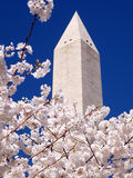 Pink Cherry Blossoms & Washington Monument 2010 Royalty Free Stock Photography
