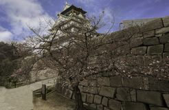 Pink cherry blossum tree and stone wall with Osaka castle under sky. Pink cherry blossum tree and stone wall with Osaka castle under blue sky, Japan Stock Images