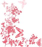 Pink cherry flowers with butterflies Stock Image