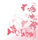Pink cherry tree flowers and butterflies Stock Image