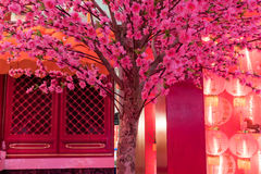 Pink chinese plum flower or japanese apricot flower with red lig Stock Images
