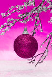 Pink Christmas ball. On winter tree royalty free stock photography