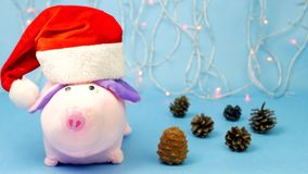 A pink Christmas pig in a red Santa Claus hat is looking at the camera, in the background are Christmas lights, a blue stock video