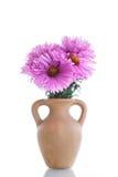 Pink chrysanthemum Stock Image
