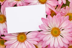 Pink Chrysanthemum bouquet with blank tag. Pink Chrysanthemum Floral bouquet background with blank greeting tag to insert your marketing message or florists Stock Image