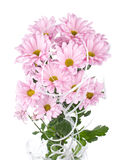 Pink chrysanthemum flowers bouquet Stock Photography