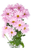 Pink chrysanthemum flowers bouquet Royalty Free Stock Photography