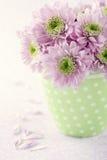 Pink chrysanthemum flowers1 Royalty Free Stock Photos