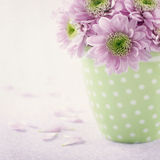 Pink chrysanthemum flowers3 Stock Image