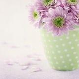 Pink chrysanthemum flowers3 Stock Image