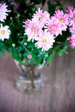 Pink chrysanthemum in glass vase Stock Images